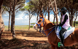 Endurance Horse Races in Europe